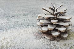 cone de abeto da Ainda-vida Imagens de Stock