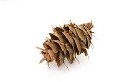 Cone de abeto de Douglas Foto de Stock