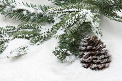 Cone de abeto do inverno Fotos de Stock Royalty Free