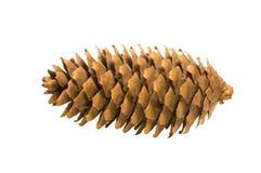 Cone de Brown imagens de stock royalty free