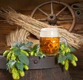 Cone de lúpulo com cerveja Foto de Stock