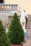 Cone decorativo da árvore    Imagem de Stock Royalty Free
