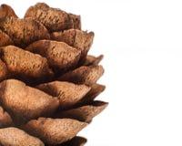 Cone do abeto vermelho do Natal Cone de Brown no fundo branco Fotografia macro Tema do Natal Decoração do Natal imagens de stock