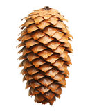 Cone do pinheiro isolado no branco Fotos de Stock Royalty Free