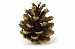 Cone do pinho Imagens de Stock Royalty Free