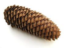 Cone do pinho Imagens de Stock