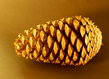 Cone do pinho Foto de Stock