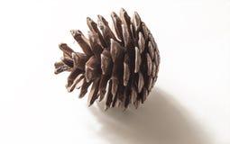 Cone do pinho Fotos de Stock Royalty Free