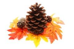 Cone do pinho com folhas Imagens de Stock