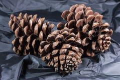 Cone do pinho de Brown com pano preto foto de stock