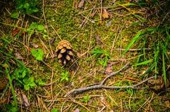 Cone do pinho em um fundo da grama Fotos de Stock