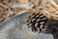 Cone do pinho em uma rocha sparkly foto de stock royalty free