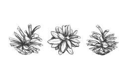 Cone do pinho Ilustração desenhada mão do vetor Objetos isolados Cones do Natal ajustados no estilo do esboço Imagens de Stock Royalty Free