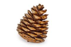 Cone do pinho isolado Fotos de Stock