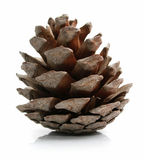 Cone do pinho isolado no branco Fotos de Stock