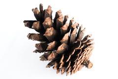 Cone do pinho isolado no fundo branco Fotografia de Stock