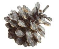 Cone do pinho na neve Imagem de Stock