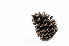 Cone do pinho no fundo branco Fotografia de Stock