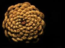 Cone do pinho no preto Imagens de Stock