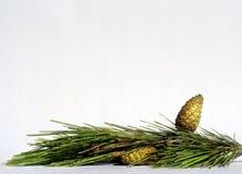 Cone dourado imagem de stock