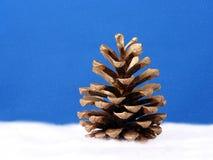 Cone dourado do pinho fotografia de stock