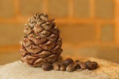 Cone e porcas do pinho em um shell em um guardanapo no fundo de uma parede de tijolo Imagem de Stock