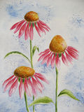 Cone Flower. Drawing of cone flower blossoms on blue background, created by the photographer with watercolor pencils on artist paper stock illustration