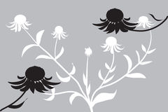 Cone flower in black & white. Black & White illustration of a cone flower (echinacea) with a grey background Royalty Free Stock Photography