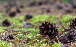 Cone in the grass stock photo