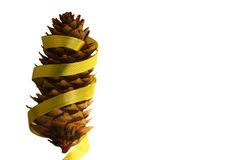 Cone isolado do pinho com fita dourada e com bobina Fotografia de Stock