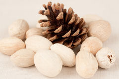 Cone and nuts. Decor with cone white nuts Stock Photography
