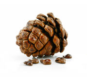 Cone and Nuts of Siberian Cedar Isolated on White Stock Image