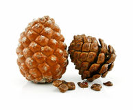 Cone and Nuts of Siberian Cedar Isolated on White Stock Photos