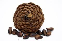 Cone of pine Stock Image