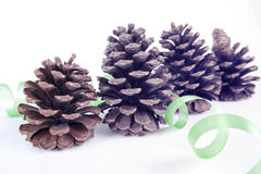 Cone of pine. Four pine cones isolated with white background royalty free stock image