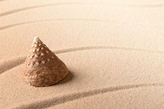 Cone sea shell on sandy beach. Lines in sand and background with copy space stock photos