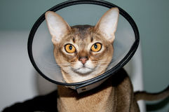 Cone of Shame Stock Image