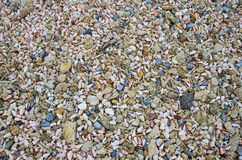 Cone shells and dead coral Stock Photos