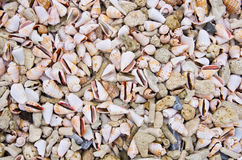 Cone shells and dead coral Royalty Free Stock Images