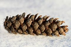 Cone on the snow Stock Image