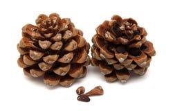 Cone of Stone pine, Pinus Pinea Royalty Free Stock Photos