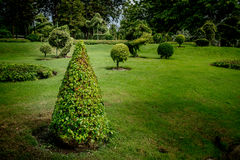 Cone trimmed bush Stock Images