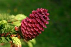 Cone vermelho Imagem de Stock Royalty Free