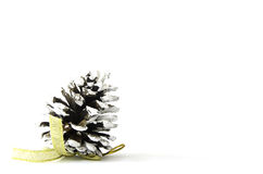 Cone on white background. close up. Stock Photos