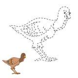 Conecte el juego de los puntos: cultive el pájaro (el pavo) Fotos de archivo