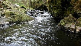 Conecte en cascada en la pequeña corriente de la montaña, agua está corriendo almacen de video