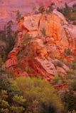 Conefirs-Kontrast mit den roten und orange Klippen Lizenzfreies Stockfoto