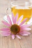 Coneflower del té herbario y de la púrpura Imágenes de archivo libres de regalías