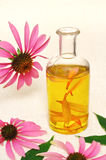 Coneflower essential  oil in bottle Stock Photo