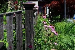 Coneflowers davanti al portone della casa fotografie stock libere da diritti
